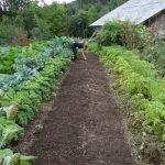 Les bonnes raisons de planter des fleurs dans son jardin potager